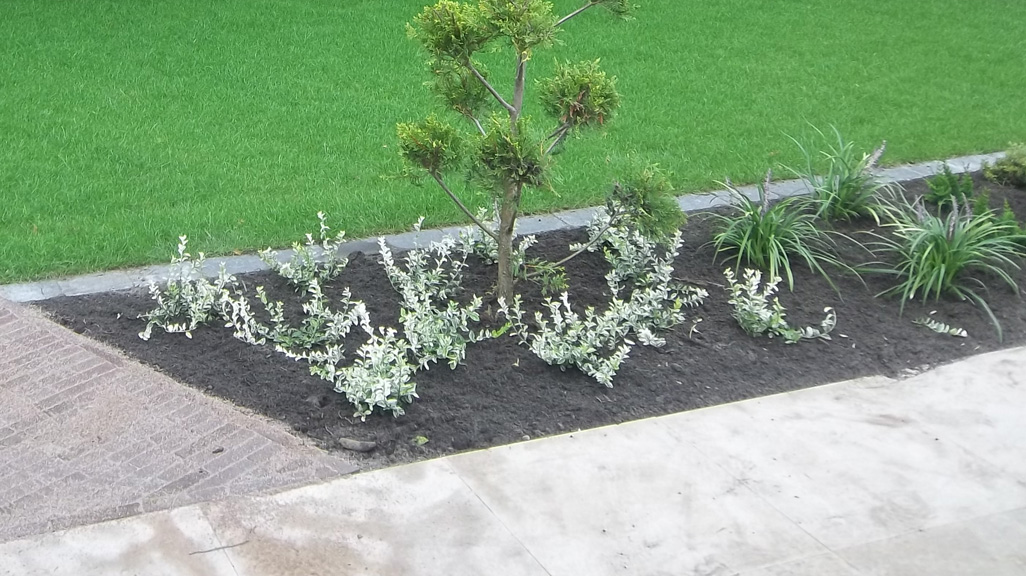 voor-achtertuin-renovatie-5